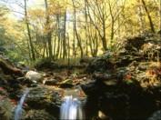 Ein Stück unzerstörte Natur: Ahornwald