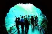 Museum of Marine Biology and Aquarium