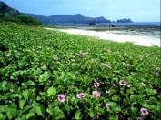 Strand von Green Island