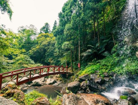 mautu discovery forest